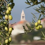 lumbarda-olives-church